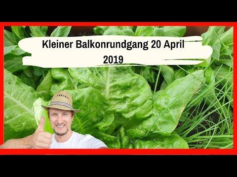Kleiner Balkongarten Rundgang 20 April 2019 🔴
