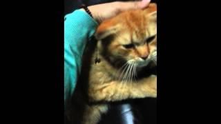 My cat → Jongki Thumbnail