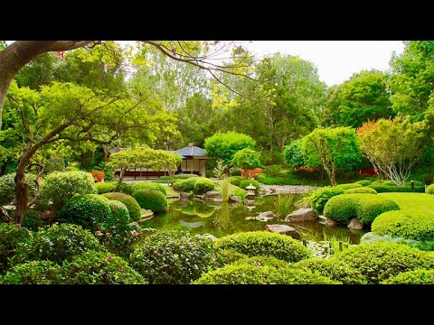 Mt coot-tah Botanic Gardens 2018 | 4K