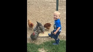THE CHICKEN SONG FUNNY FOR KIDS 1+