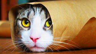 10 ГЛУПЫХ Мифов о Кошках, в которые ТЫ Веришь!