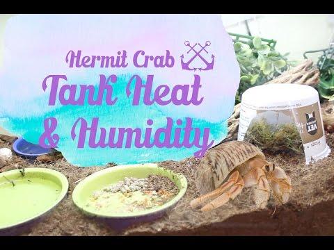 Hermit Crab Tank Heat & Humidity