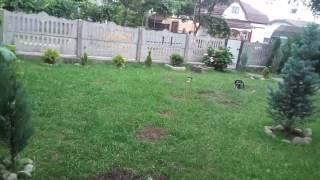 видео Кроты на газоне. Как избавиться от кротов.