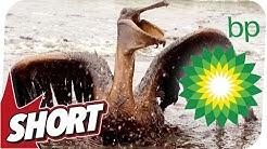 Die Folgen der Öl-Katastrophe! - Deepwater Horizon
