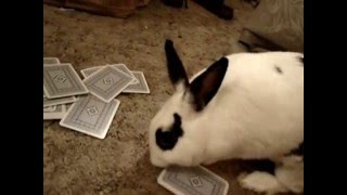 A Bunny & 2 Cats Playing Cards