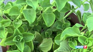 Oregano (Karpuravalli) - must grow this plant in every house for Infants | Poovali | News7
