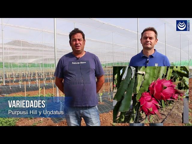 Pitaya · Innovación en cultivos