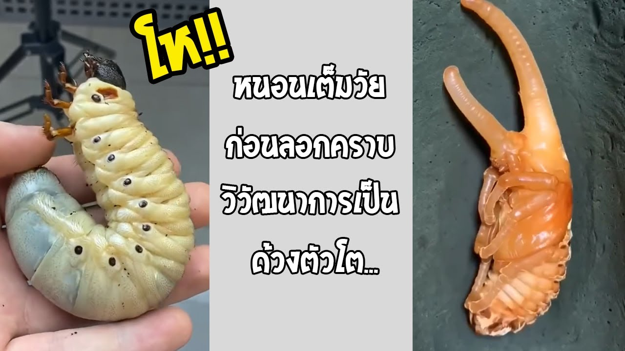 เลี้ยงแบบนี้สักตัวไหมครับ จะเลี้ยงหรือทอดกินกันก่อนละนี่!!... #รวมคลิปฮาพากย์ไทย