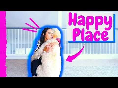 Does Your Dog Have a Happy Place? // Teaching Dog #STAY Command