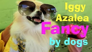 Iggy Azalea - Fancy (Puppy & Doggy Parody)