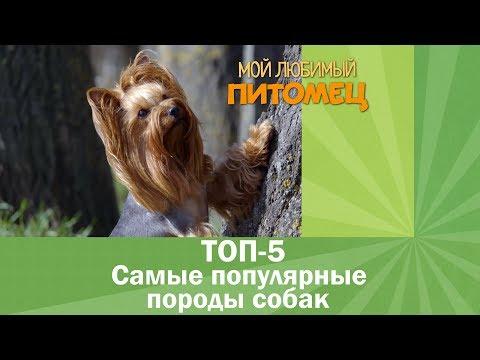 Вопрос: Какие любимые породы собак в Москве?