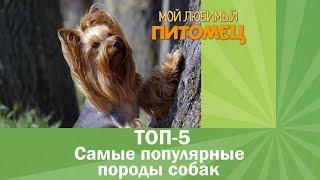 Самые ПОПУЛЯРНЫЕ породы собак. ТОП-5