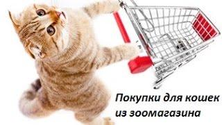 покупки из зоомагазина для кошек. котёнок открыл ГЛАЗА