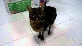 Котёнок после клиники на передержке,была кость в горле три недели....(, 2016-03-06T16:28:35.000Z)