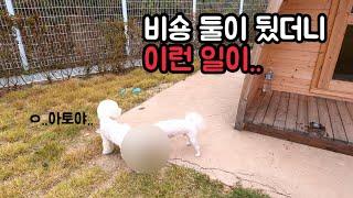 아토마루 TV동물농장에 나온 의성 펫월드가다!!