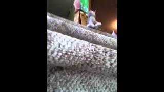 Angry Birds Vs. Webkinz 1-1