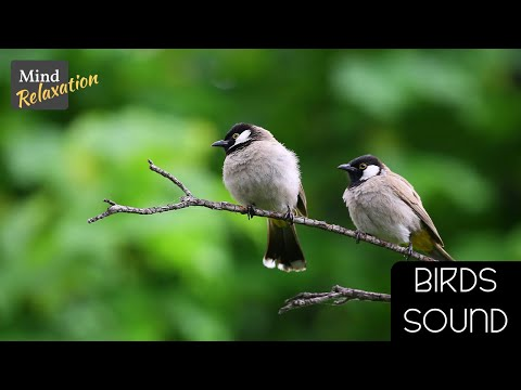 Nature Sounds Birds And  Soothing Forest Birds Singing - Relaxing Sleep Sounds