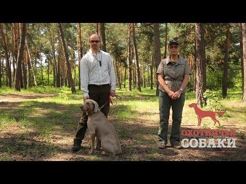 Охотничьи собаки. 22 серия. Веймаранер