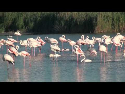 Camargue, France, 2011, HD 1080p