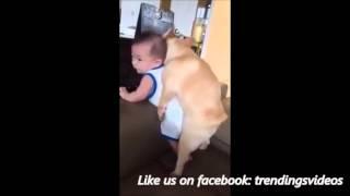 Crazy Horny Dog Vine