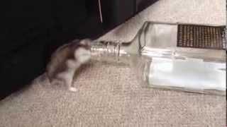酔っぱらいハムスター(Drunk hamster)
