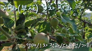 사과(부사)  2차적과…