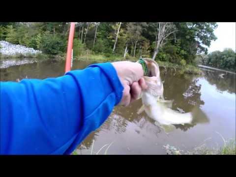 Powhatan Lakes froggin