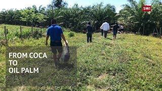 Taking responsibility for deforestation