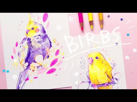 Drawing Birbs - Colored Pencils