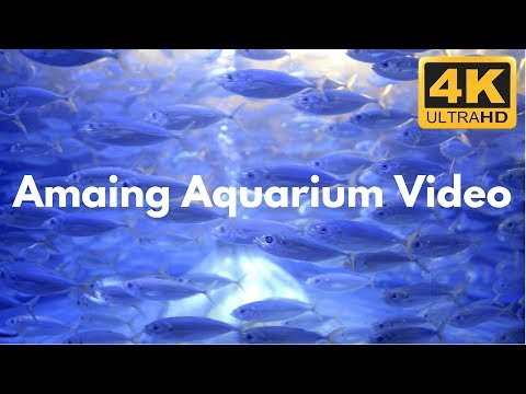 Mesmerizing Aquarium Filmed in 4K Ultra HD