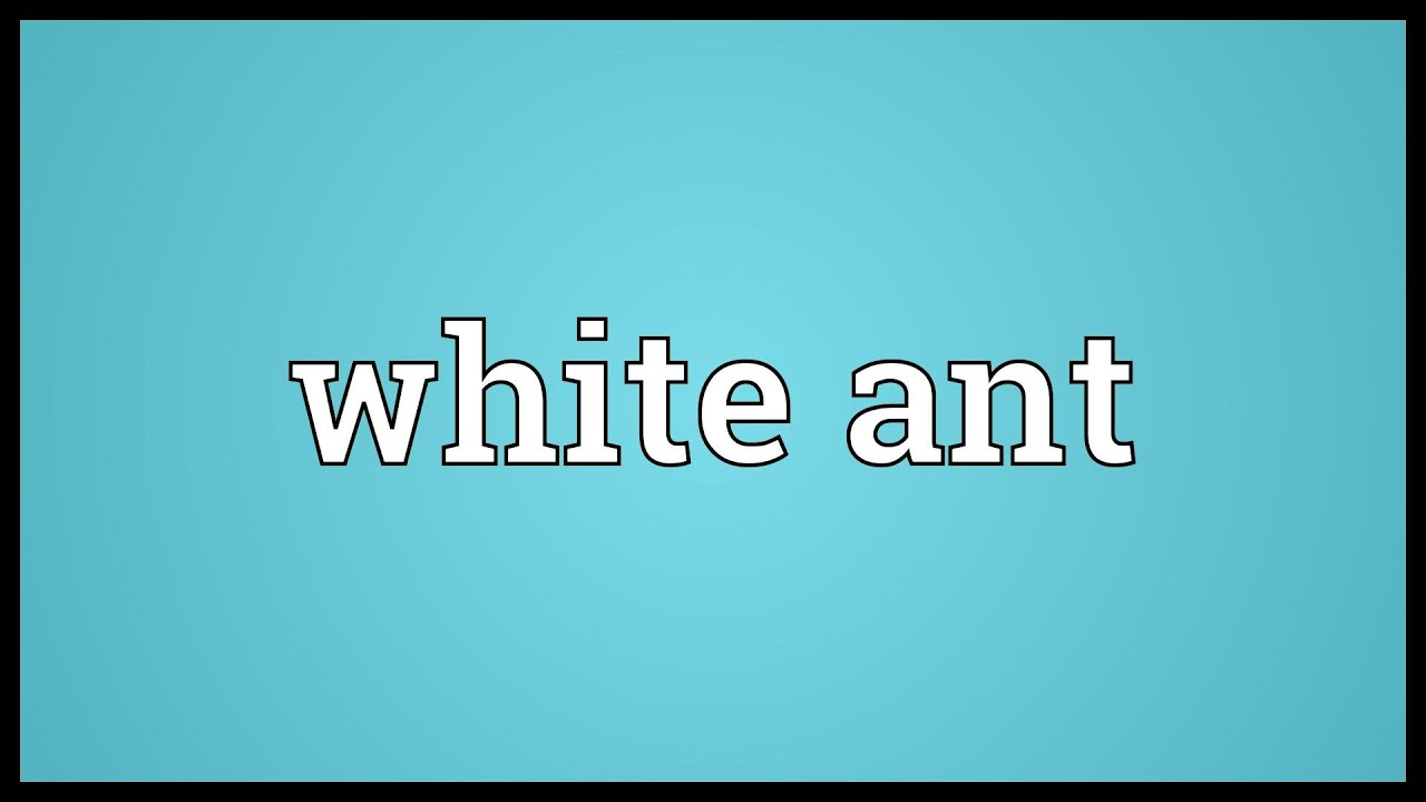White ant Meaning - YouTube