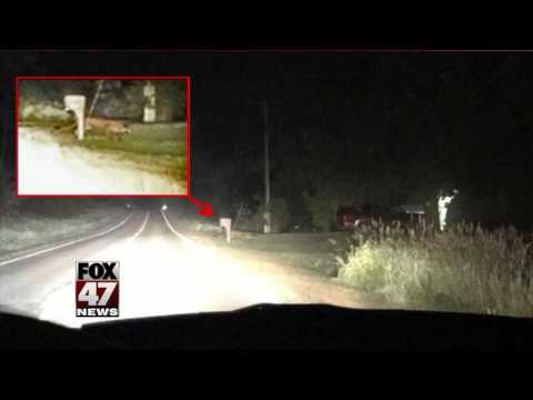 DNR confirms cougar sighting in Clinton County