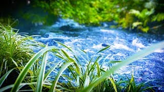 10 Hours River Sleep Sounds | Water White Noise for Relaxation