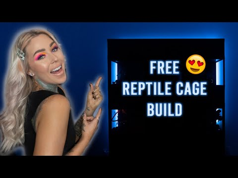 building-a-reptile-wall-for-free!!