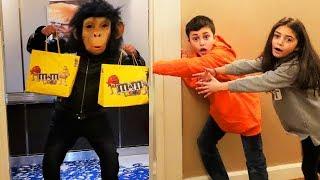 العاب البقالة التسوق في السوبر.  القرد يهرب من القفص نتظاهر اللعب تسوقفي  Heidi و Zidane