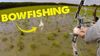 BOWFISHING FOR CARP - Hunting Fish!