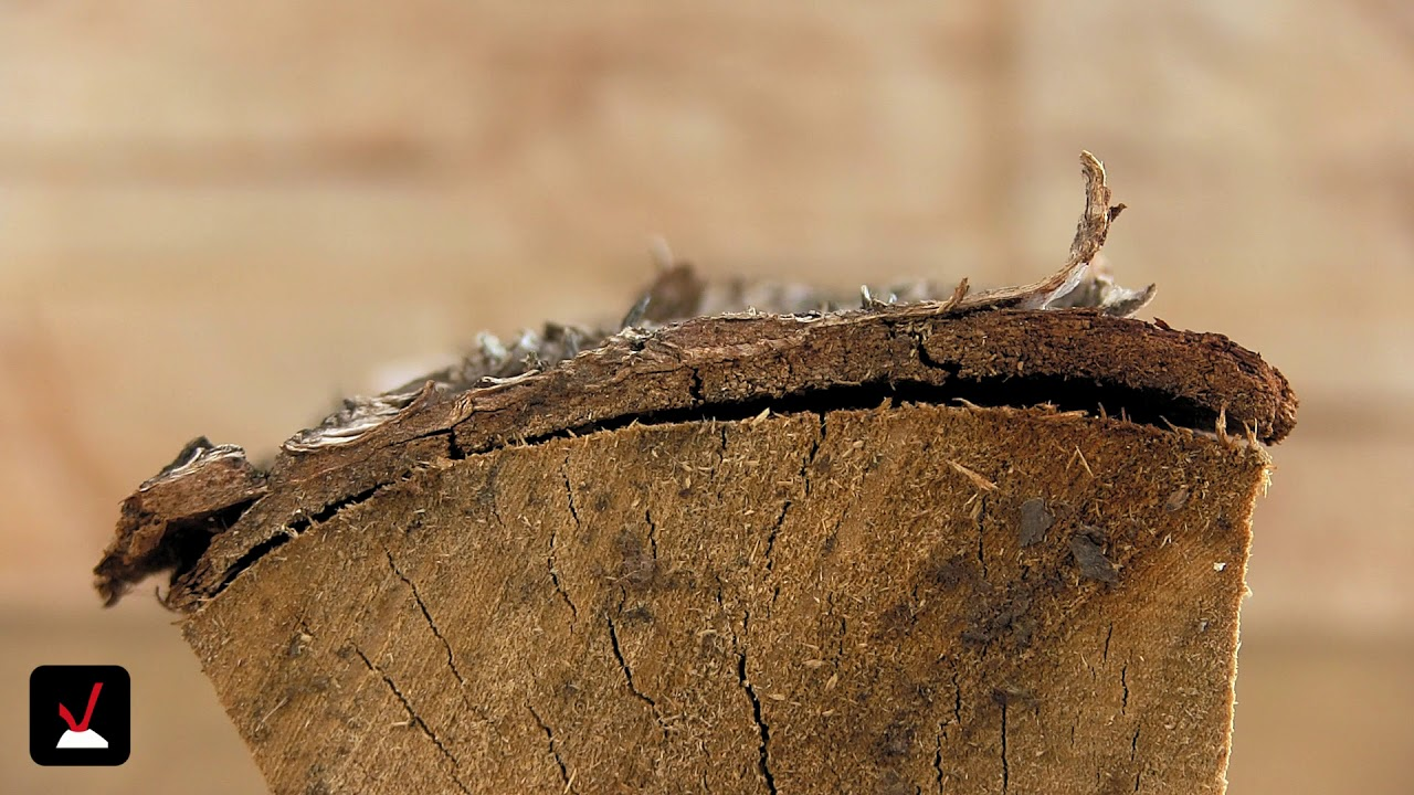 brennholz birke vor und nachteile youtube