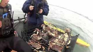 Half Moon Bay Dungeness crab opener (Kayak Crabbing)