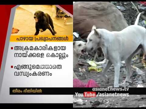 Stray dog menace continues in Kerala