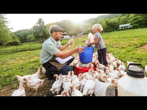 Are my Pastured Meat Chickens Actually Ok?