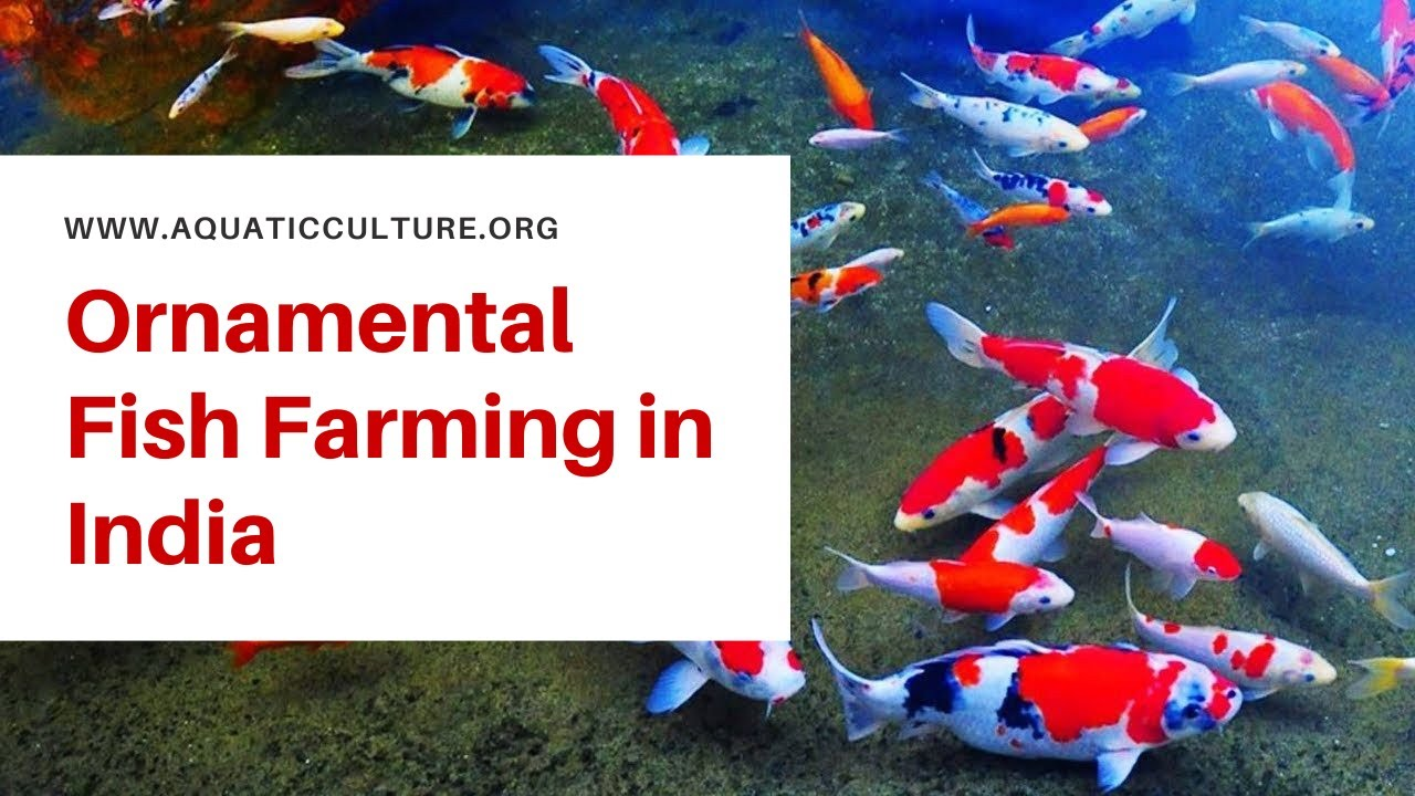 Ornamental Fish Farming in India