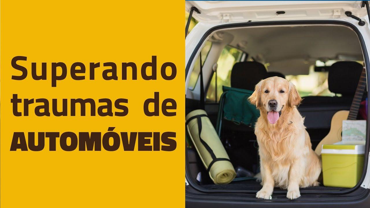 CÃES E AUTOMÓVEIS - Superando traumas!