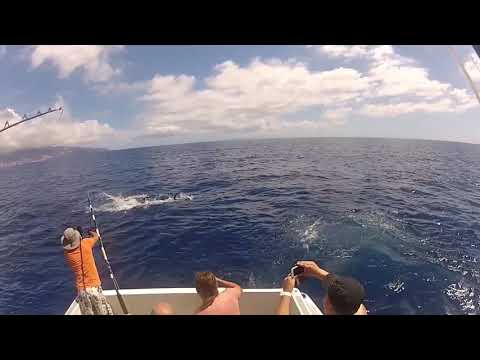 Marlin Madeira Balancal