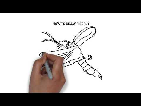 How To Draw Firefly Youtube
