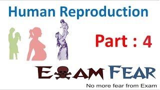 Biology Human Reproduction part 4 (Female Reproductive System: Fallopian tube) class 12 XII