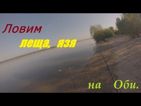 ловля язя в сибири видео