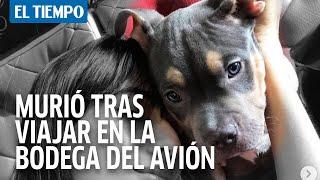 Denuncia que su perro murió por tener que viajar en bodega de avión