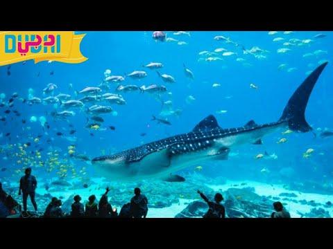#Dubaiaquarium #UnderwaterZoo#Dxb The Lost Chambers Aquarium Atlantis The Palm In Dubai SRF3 WORLD