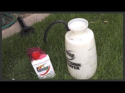 How to apply Roundup weed killer