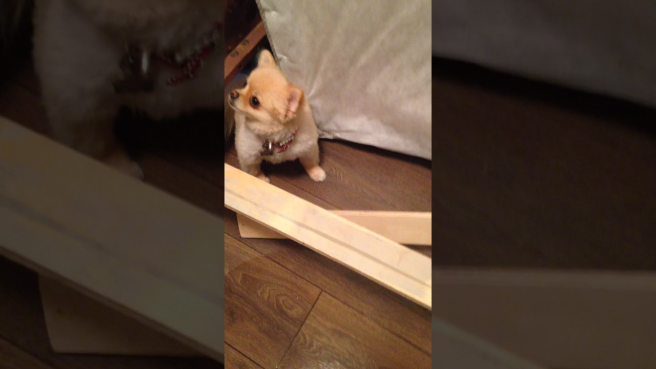 puppy scolded for pooping inside - youtube